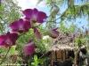 baa-panburi-village105