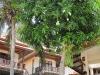 buritara-resort071