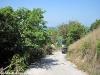 coconut-beach38