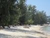 coconut-beach63