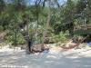 coconut-beach67