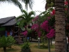coral-beach-bungalow12