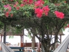 coral-beach-bungalow48