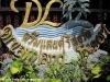 dreamland-resort-phangan048