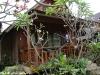 green-papaya-resort019