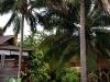 green-papaya-resort024
