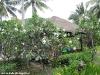 green-papaya-resort117
