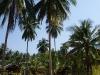 Malibu Beach Bungalow Foto Resort 042