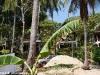 moon-paradise-resort13