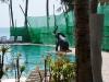 phangan_bayshore_resort006
