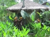 rasananda-ko-phangan1046