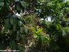 Santhyia Resort & Spa Ko Phangan Resort Foto 27