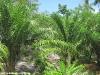 thongtapan_resort080